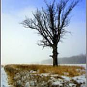 The Lone Tree Poster by Trina Prenzi