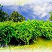 The Mother Vine - Roanoke Island, Nc Poster