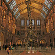 The Museum Of Natural History... London Poster