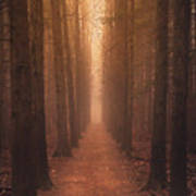 The Narrow Path Poster