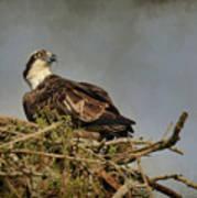 The Osprey Nest Poster