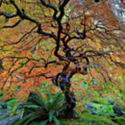 The Other Japanese Maple Tree In Autumn Poster