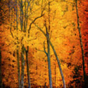 The Path To Autumn Poster