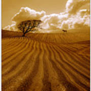 The Ploughed Field Poster by Mal Bray