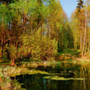 The Pond In The Spring Poster