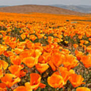 The Poppy Fields - Antelope Valley Poster by Peter Tellone