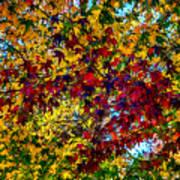The Rainbow Tree Poster