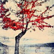 The Red Tree At Okanagan Lake Poster