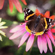 The Regal Red Admiral Poster