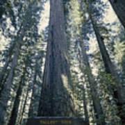 The Shenandoah National Forest Poster