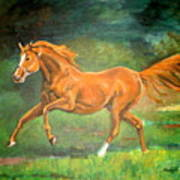 The Stallion-horse Art Painting  Poster