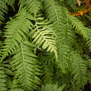 The Standout Fern Poster