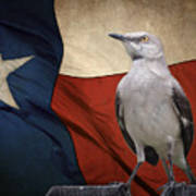 The State Bird Of Texas Poster