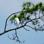 The Stoic Egret - Debbie May Poster
