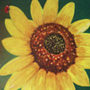 The Sunflower In Our Garden Poster