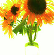 The Sunflowers In A Glass Vase. Poster