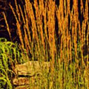 The Tall Grass Poster