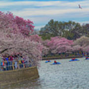 The Tidal Basin During The Washington D.c. Cherry Blossom Festival Poster