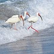 The Tide Of The Ibises Poster