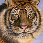 The Tiger, 16x20, Oil, '08 Poster