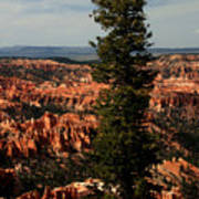 The Tree In Bryce Canyon Poster