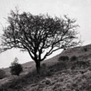 The Tree On The Fell Poster