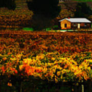 The Vines During Autumn Poster