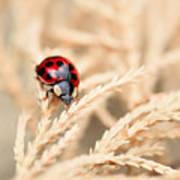 The Wandering Ladybug Poster
