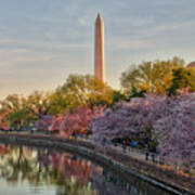 The Washington Monument And The Cherry Blossoms Poster