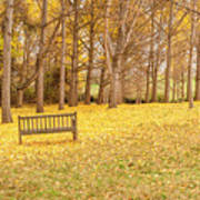 The Yellow Leaves Of Fall Carpet The Ground Of A Ginkgo Biloba Grove. Cm3 Poster