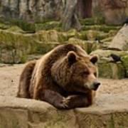 Thinker Bear Poster
