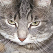 Thinking Holly The Cat Poster