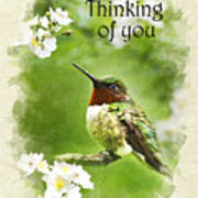 Thinking Of You Hummingbird Flora Fauna Greeting Card Poster