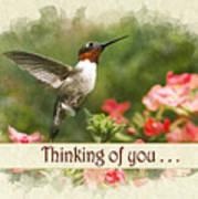 Thinking Of You Hummingbird Garden Jewel Greeting Card Poster