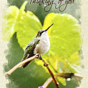 Thinking Of You Hummingbird In The Rain Greeting Card Poster