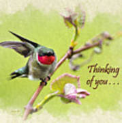Thinking Of You Hummingbird Wing And A Prayer Greeting Card Poster