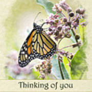 Thinking Of You Monarch Butterfly Greeting Card Poster