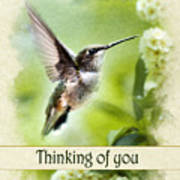 Thinking Of You Peaceful Love Hummingbird Greeting Card Poster