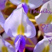 Thinking Of You Wisteria Poster