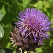 Thistle In Bloom Poster