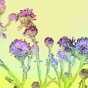 Thistles Under The Sun Poster