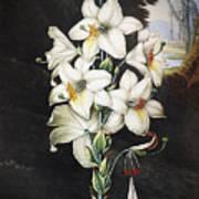 Thornton: White Lily Poster