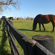 Thoroughbred Horses In Kentucky Pasture Poster