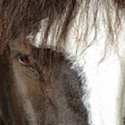Thoroughbred Portrait One Poster