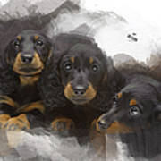 Three Adorable Black And Tan Dachshund Puppies Poster