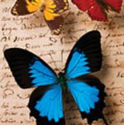 Three Butterflies Poster