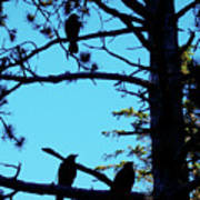 Three Crows In A Tree Poster