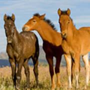 Three Foals Poster