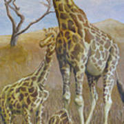 Three Giraffes Poster