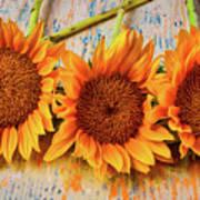 Three Graphic Sunflowers Poster